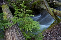 Glacier Creek Stock Photography