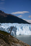 Glacier et arbre Photo stock