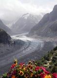 Glacier et fleurs Photographie stock libre de droits