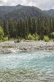 Hoh River and Rainforest royalty free stock photography