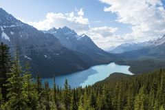Glacier fed Peyto lake with turquoise waters royalty free stock images