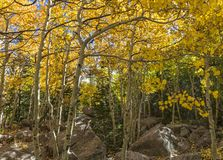 Glacier Gorge Trail Aspens Stock Photo