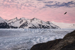 Glacier grey. Sunset of Glacier Grey in Torres del Paine National Park of Chile with a condor flying overhead Stock Image