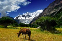 Glacier and horse Stock Photos