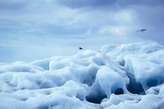 Glacier iceberg with seagulls. Iceland Stock Image