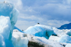 Glacier Lagoon in east Iceland Royalty Free Stock Images