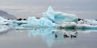 Glacier Lagoon icebergs and geese Stock Photography