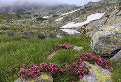 Glacier lake,high mountains and stunning pink rhododendron flowers Royalty Free Stock Images