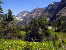 Glacier Lilies - Garden Wall. This image of the wildflower meadow with the mountains in the background was taken in Glacier National Park Stock Photography