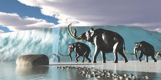 Glacier Mammoths Stock Image