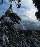 Glacier National Park che nevica nell'inverno Fotografia Stock