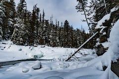 Glacier National Park che nevica nell'inverno Immagine Stock Libera da Diritti