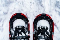 Glacier National Park che nevica nell'inverno Fotografia Stock Libera da Diritti