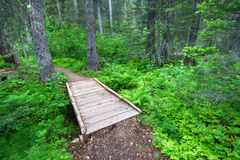 Glacier National Park Hiking Trail Royalty Free Stock Photo