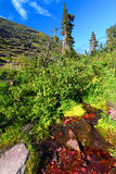 Glacier National Park Hillside Stream Stock Photos