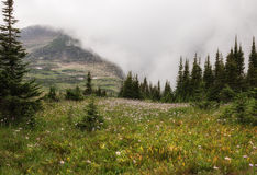 Glacier National Park Wildflowers Stock Image