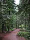 Glacier National Park, winding path through trees royalty free stock photo