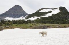 Glacier Nationalpark Lizenzfreie Stockfotos