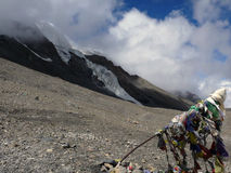 Glacier near Prayer Flag in Himalayas Royalty Free Stock Photo