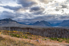 Glacier NP, after a fire in 2015 Royalty Free Stock Photography