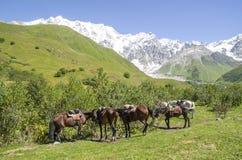 Glacier Shkhara and the Inguri River Valley, Svaneti. Georgia royalty free stock photo