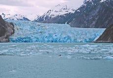 Glacier in SW Alaska. Sawyer glacier, Tracy Arm in Southwest Alaska. Harbor seals on ice floes Royalty Free Stock Photos