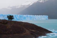 Glacier and Tree. Moreno Glacier in El Calafate Argentina Royalty Free Stock Photography