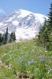 Glaciers on Mount Rainier Royalty Free Stock Photos