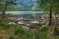 Glacjalny Czarci ` s jezioro otaczający lasem Obraz Stock