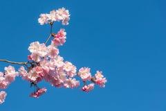 Glad blomning på blå himmel royaltyfri foto