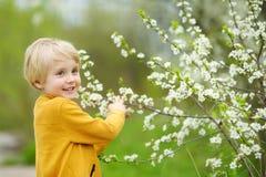 Free Glad Boy Admiring Blossom Cherry Tree In Sunny Garden Stock Photo - 208827420