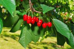 Glad fruktträdgård Fotografering för Bildbyråer