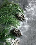 glad jul lyckligt nytt år Julgran och kottar i snön på en grå bakgrund för ett hälsa kort royaltyfri bild