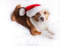 Glad julhund Fotografering för Bildbyråer