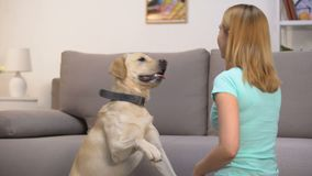 Glad pet owner teaching dog commands, giving praise and kibble of food, cynology. Stock footage stock video footage