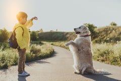 Glad pys som utbildar hans husdjur arkivfoto