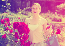 Glad young woman working with bush roses with horticultural tool. S in garden on sunny day Stock Photos