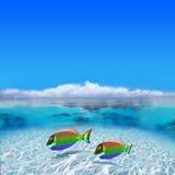 glada färgrika fiskar Royaltyfria Foton