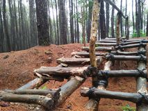 Gladde bosrijke weg aan pijnboombos stock foto