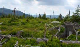 Glade в горе Стоковые Фотографии RF