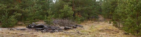 Glade в древесине сосны с сложенными ветвями - ландшафте осени Стоковое Фото