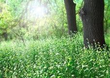 Glade леса sunlit Стоковые Фотографии RF