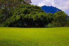 Glade лета растительности стоковое изображение