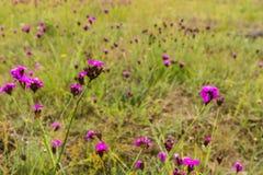 Glade зацветая цветков Стоковое Фото