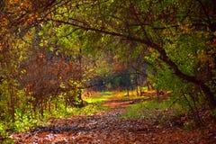 Glade леса далеко от цивилизации стоковая фотография rf