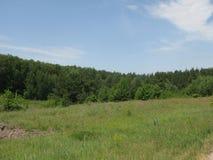 Glade лета зеленый холмистый стоковое фото rf
