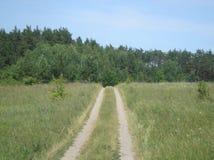 Glade лета зеленый холмистый стоковые изображения rf