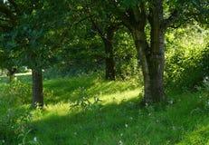 Glade, солнечный свет и тень, с розовыми цветками Стоковое Фото