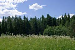 glade солнечный Стоковые Фотографии RF