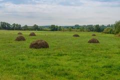 Glade с haystacks стоковое фото rf